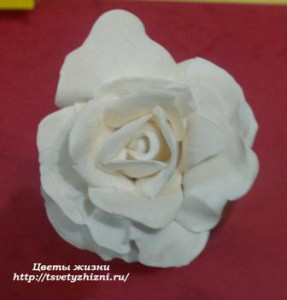 white_rose_mini