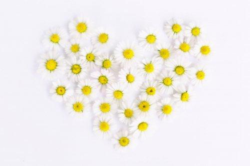 daisy-1535532_1920_500x333