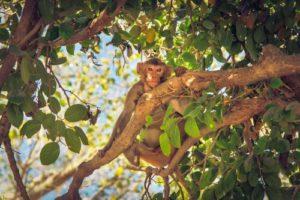 monkey-2158511_1920_500x333