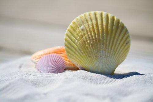shells-792912_1920_500x333