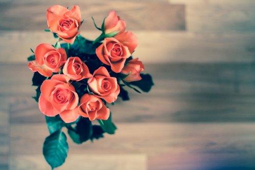 roses-690085_1920_500x333