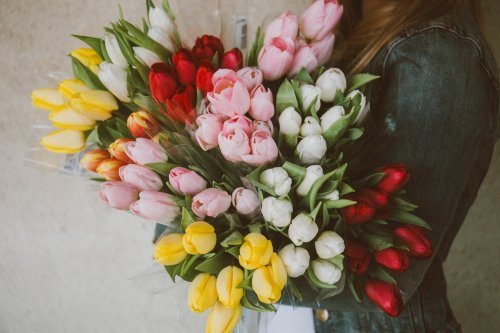 tulips-2617216_1920_500x333